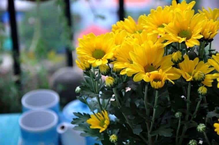những loại hoa nên đặt bàn thờ